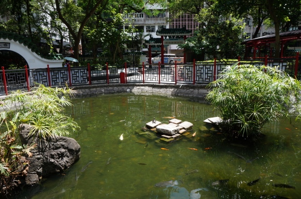 sheung wan hong kong park pond turtles